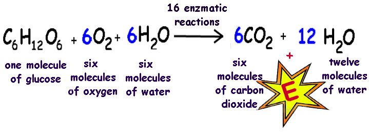 xseeerede2012: respiration and photosynthesis equations