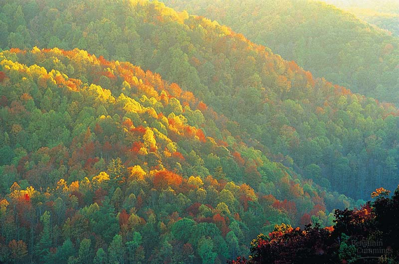 Regret, northeast asian deciduous forest reserve, neither