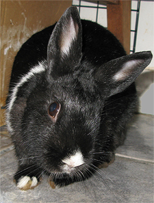 How to Diagnose Wry Neck in Rabbits recommend